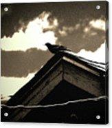 Bird On My Garage Acrylic Print