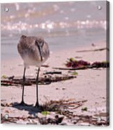 Bird On The Beach Acrylic Print