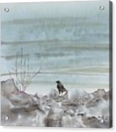 Bird On The Shore Acrylic Print