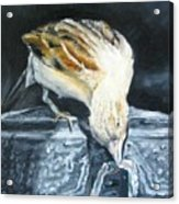 Bird Original Oil Painting Acrylic Print