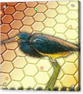 Bird Ponders The Disappearing Bees And Several Biological Markers Left In The Hive Acrylic Print by Wendy J St Christopher