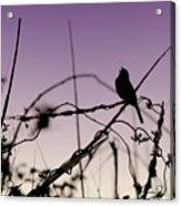 Bird Sings Acrylic Print