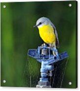 Bird Siting On A Water Sprinkler Acrylic Print