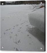 Bird Tracks In The Snow Acrylic Print