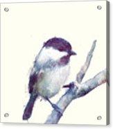 Bird // Trust Acrylic Print