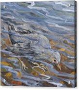 Bird Underwater Acrylic Print