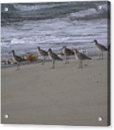Bird Walk Acrylic Print