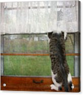 Bird Watching Kitty Cat Acrylic Print