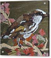 Bird White Eye Acrylic Print