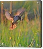 Bird With Prey Acrylic Print