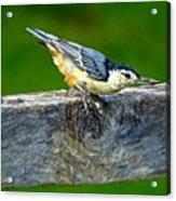 Bird With The Seed Acrylic Print