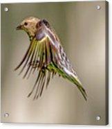 Bird2 Acrylic Print
