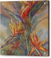 Birdies Acrylic Print