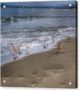 Birding Acrylic Print