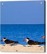 Birdline Acrylic Print by Gary Dean Mercer Clark
