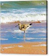 Birdling Acrylic Print