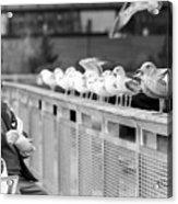 Birdman Of Lower Manhattan Acrylic Print