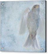 Birdness Acrylic Print by Jim Wright