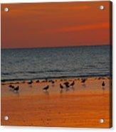 Birds Amongst The Glow Acrylic Print