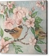 Birds And Blossoms Acrylic Print