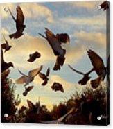 Birds And Fun At Butler Park Austin - Birds 1 Acrylic Print