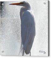 Birds And Fun At Butler Park Austin - Birds 2 Macro Acrylic Print