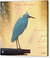 Birds And Fun At Butler Park Austin - Birds 3 Detail Macro Poster - Good Morning Acrylic Print