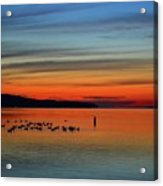 Birds At Dawn By The Buoy  Acrylic Print