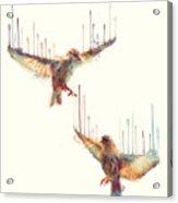 Birds // Awake Acrylic Print