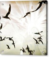 Birds Explosion Acrylic Print
