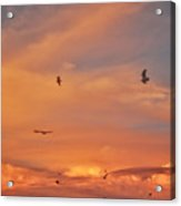 Birds Eye Of The Sunset Acrylic Print