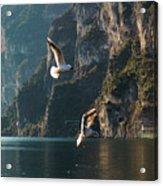 Birds Fishing Acrylic Print