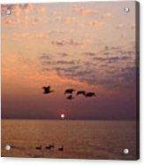 Birds Flying And Floating At Sunrise Acrylic Print