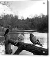 Birds I Acrylic Print