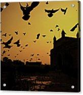 Birds In Flight At Gateway Of India Acrylic Print by Photograph by Jayati Saha