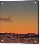 Birds In Flight At Sunrise Acrylic Print