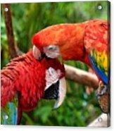 Birds In Love Acrylic Print