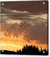 Birds In The Sky Acrylic Print