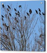 Birds In The Trees Acrylic Print