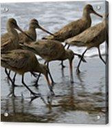 Birds Of A Feather 1 Acrylic Print