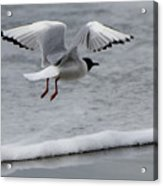 Birds Of A Feather 5 Acrylic Print