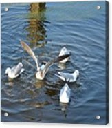 Birds Of A Feather Flock Together Acrylic Print
