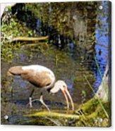 Birds Of The Everglades Acrylic Print