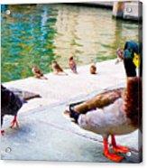 Birds Of The River Acrylic Print