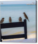 Birds On A Chair Acrylic Print