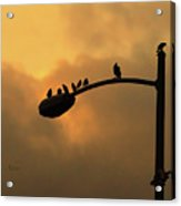 Birds On A Post Amber Light Detail Acrylic Print