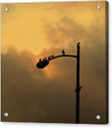 Birds On A Post Amber Light Square Acrylic Print