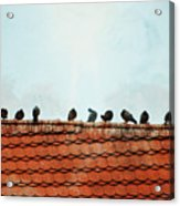 Birds On A Rooftop Acrylic Print