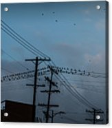 Los Angeles Birds On A Wire Acrylic Print
