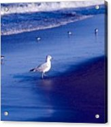 Birds On Beach Acrylic Print